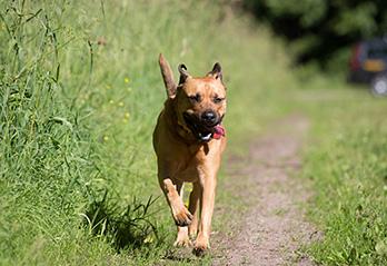 Hundförsäkring Försäkra Din Hund Sveland Djurförsäkringar