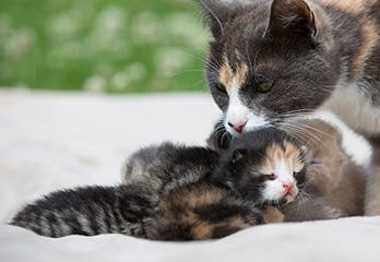 Ringorm katt medicin