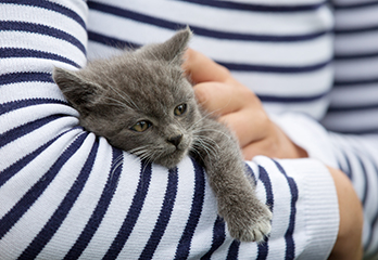 tredje ögonlocket katt